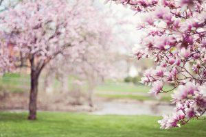 Der Frühling kommt auch nach Wallenhorst. Bestimmt. Symbolfoto: Pixabay / jill111