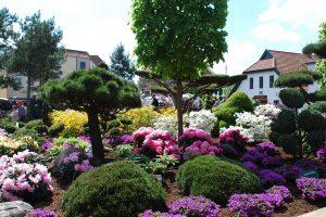 Die RHODO im historischen Stadtkern von Westerstede ist Europas größte Rhododendronschau. Foto: Touristik Westerstede e.V.