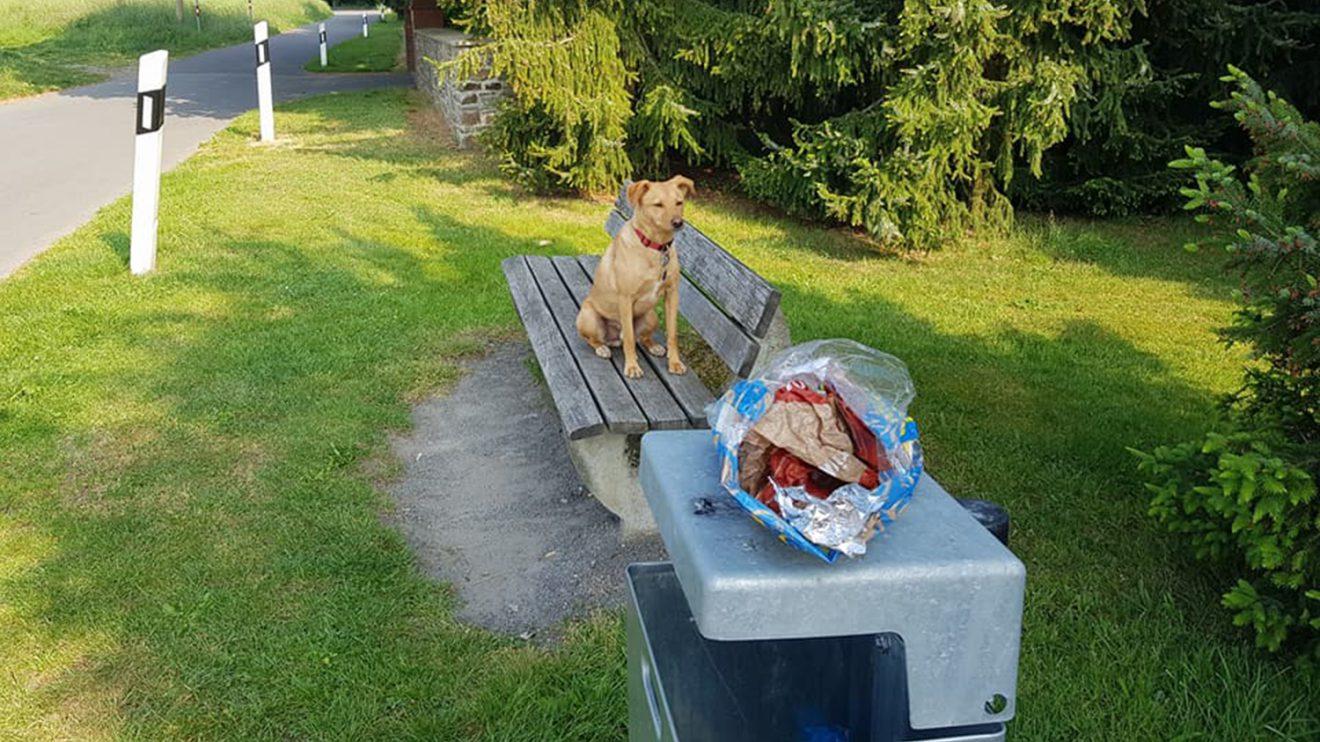 Jede Menge Müll auch im Wallenhorster Ortsteil Lechtingen. Foto: Saubermacher / City Cleaners / Birgit Schad