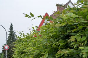 Grün auf dem Gehweg oder anderen Verkehrsflächen kann schnell zur Gefahrenquelle werden und muss beseitigt oder besser von vorn herein vermieden werden. Foto:Thomas Remme
