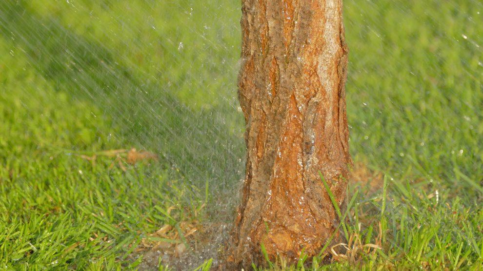 Die Gemeinde Wallenhorst bittet aufgrund der anhaltenden Dürre um Unterstützung beim Gießen der Straßenbäume. Symbolfoto: Pixabay / MSphotos
