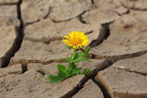 Trockenheit und Dürre herrschen weiterhin im Landkreis Osnabrück. Symbolfoto: Pixabay /klimkin
