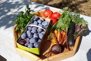 """Die Früchte der Natur im eigenen Garten: Auf dem Infoabend """"Obst und Gemüse selbst anbauen"""" erhalten Interessierte wertvolle Tipps für eine erfolgreiche Ernte. Foto: Gabriele Wosnitza"""