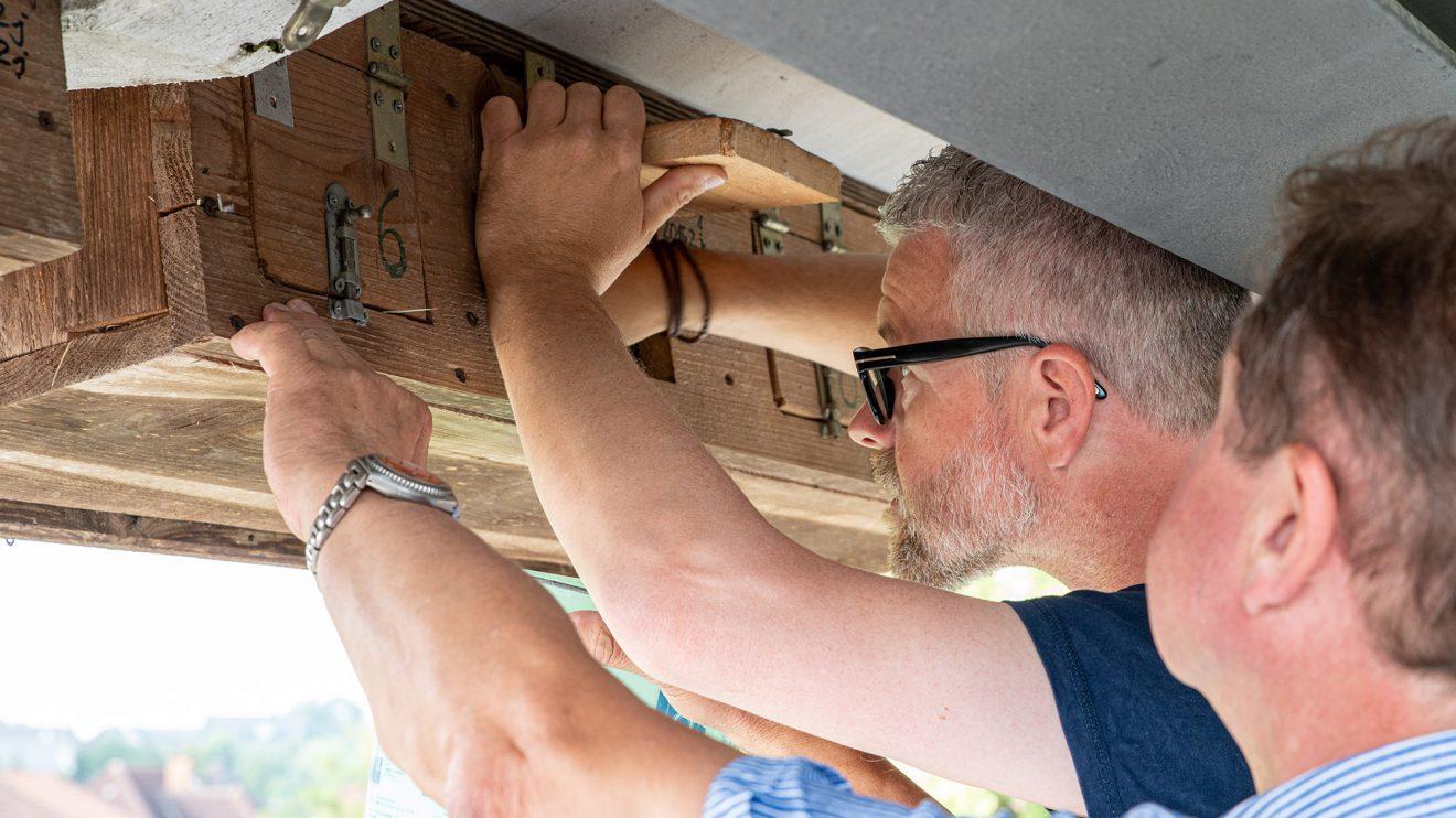 Axel Degen und Udo Stangier holen die Jungvögel durch Klappen auf der Rückseite aus den Nistkästen. Foto: Gemeinde Wallenhorst / Thomas Remme