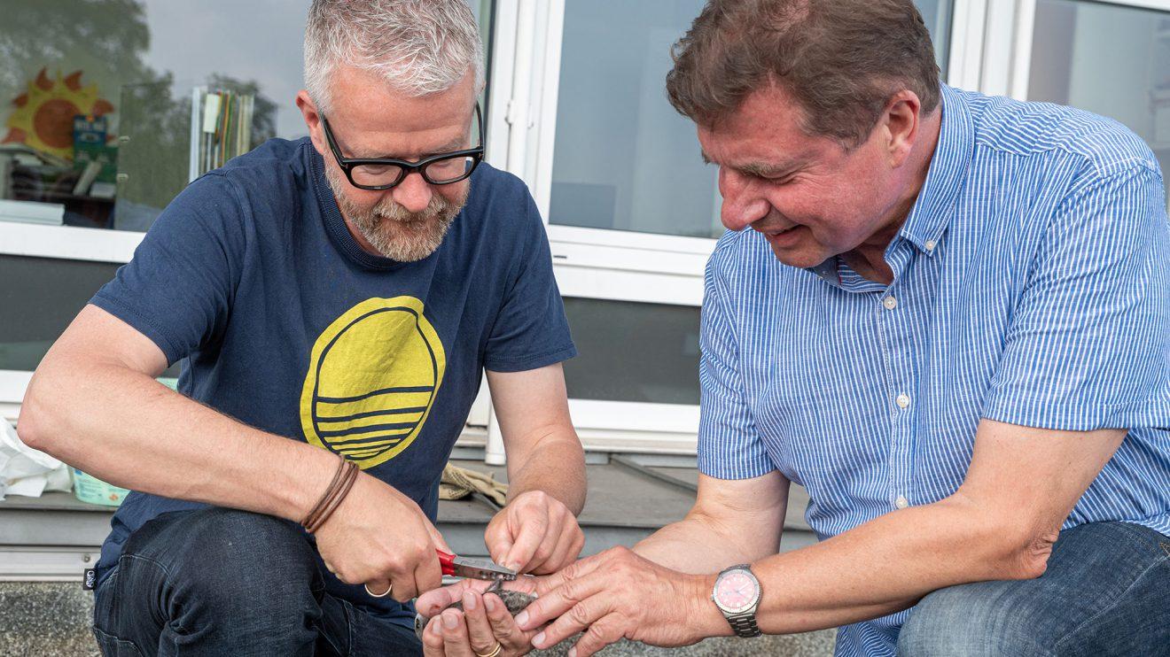21 Jungvögel beringen Axel Degen (links) und Udo Stangier – vier mehr als im Vorjahr. Foto: Gemeinde Wallenhorst / Thomas Remme