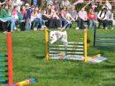Am 5. April hoppeln beim 2. Wallenhorster Osterhasenrennen im Garten des Gasthauses Beckmann wieder die Kaninchen um die Wette. Foto: René Sutthoff