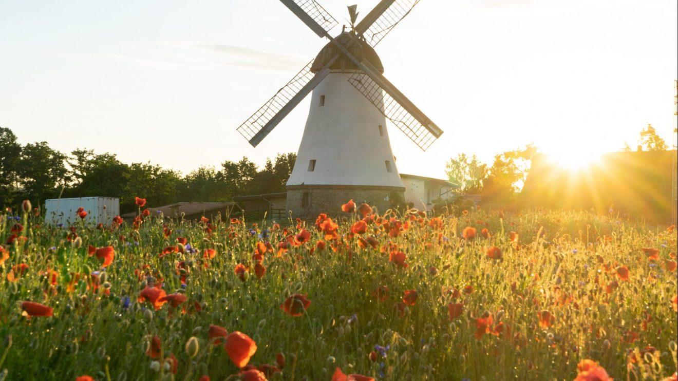 Die schöne Blühwiese vor der Lechtinger Mühle. Foto: Henrik Klawa
