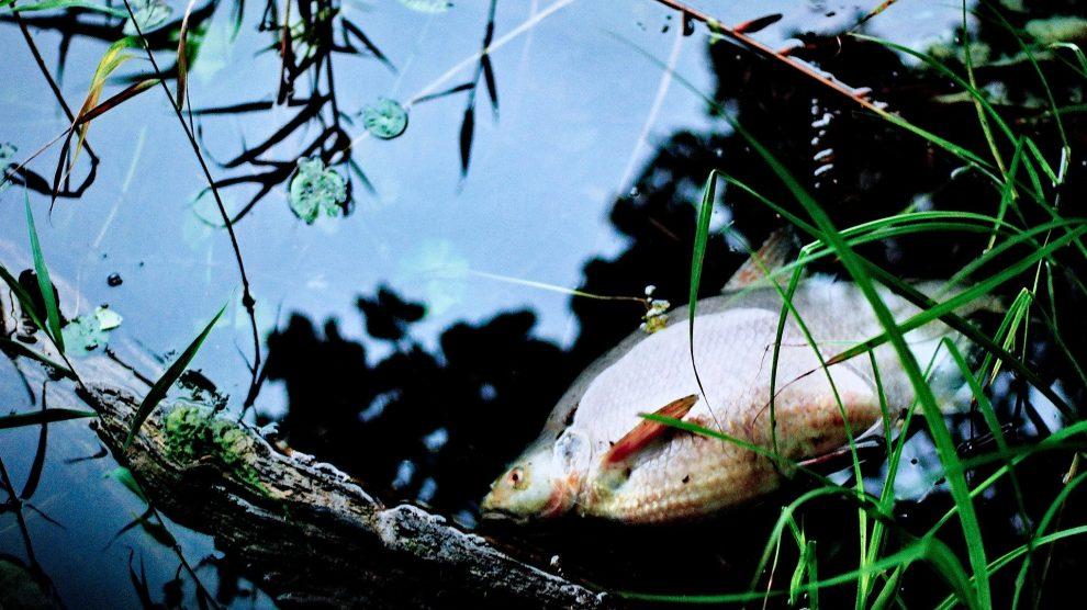 Auch der Gewässerschutzalarmdienst des Landkreises Osnabrück beobachtet das Fischsterben in der Hase im Bereich der Stadt Osnabrück und warnt vor der Nutzung des Wassers. Symbolfoto: Jerzy Górecki auf Pixabay
