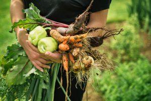 """Leckeres und frisches Gemüse aus einem """"Mietgarten"""" könnte in Wallenhorst in diesem Jahr Realität werden. Voraussetzung: Es findet sich eine ausreichend große Fläche. Symbolfoto: Viktor Pravdica / stock.adobe.com"""
