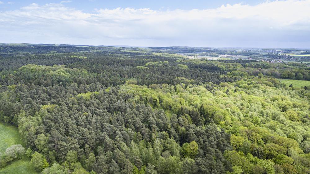 Geplante Trassenführung der A33 Nord: Der Wald Richtung Ost Rulle / Icker. Foto: clean Fotostudio
