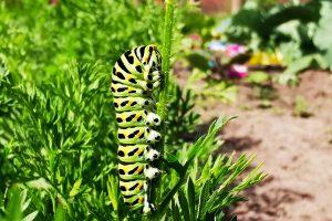 Die Natur im heimischen Garten steht im Fokus des Fotowettbewerbs. Foto: Isabella Draber