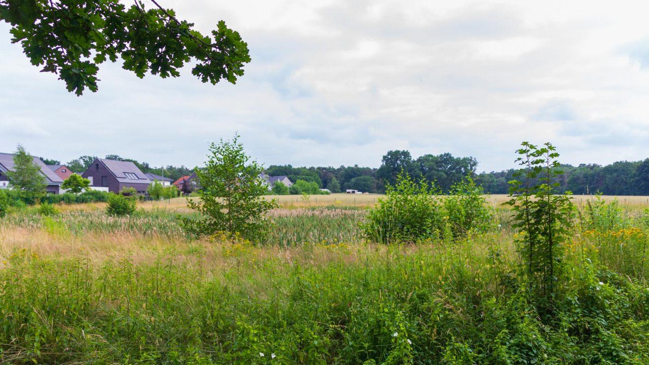 Ausblick auf das gegenüberliegende, als Biotop angelegte Regenrückhaltebecken. Foto: André Thöle