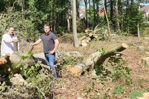 Patrick Bäune und Dominik Küttner zwischen gefällten Bäumen in Rulle. Foto: CDU-Gemeindeverband
