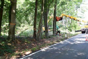 Die Baumfällaktion in Rulle wurde im Auftrag des Landesforstamtes Ankum durchgeführt. Foto: Prof. Dr. Christian Neubauer